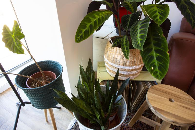 Kamerplanten voor ieder interieur